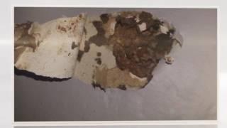 Termites Control Sydney | Termite Treatments | Pre Constructions | Termites Barrier Sydney