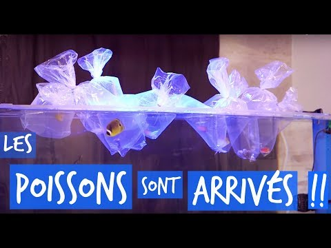 MES POISSONS MARINS SONT ARRIVES !!  -TOOPET