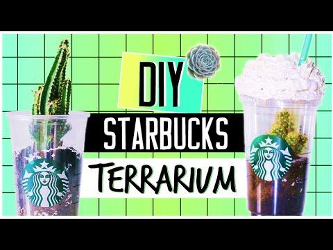 diy-starbucks-terrarium!