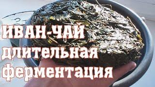 видео Иван-чай или традиционный русский чай