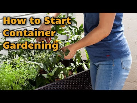 Garden Experiments: Rice, Loofa, and Potato Update