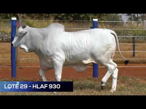 LOTE 29 - HLAF 930 - NELORE