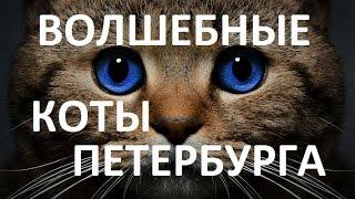 Петербург - Кот Елисей и Кошка Василиса - Поймать Удачу за Хвост - Санкт-Петербург