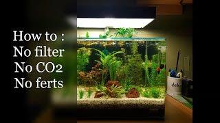 Setup : No Filter, No CO2, No Ferts Aquarium