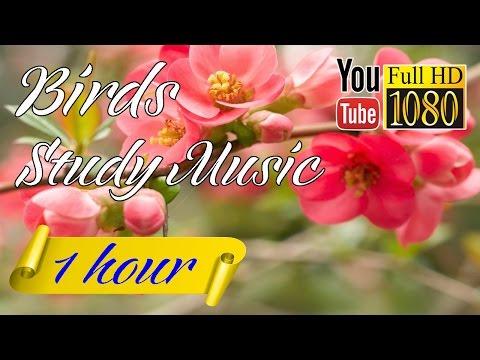 HD Music 🎶  Piano Music 🎶 Study Music 🎶 Nature Sounds 🎶 Birds