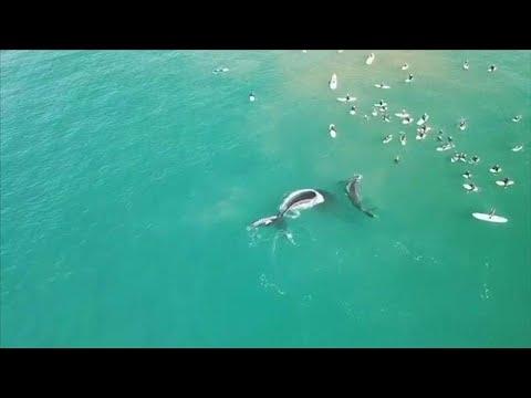 شاهد: حوت -يسحق- سائحة اقتربت منه في أستراليا  - نشر قبل 4 ساعة