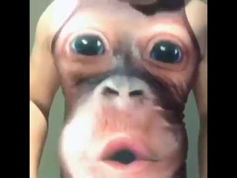 8e7c7def6 NEW⬅ Fat monkey caused by t-shirt😂😂😂 - YouTube
