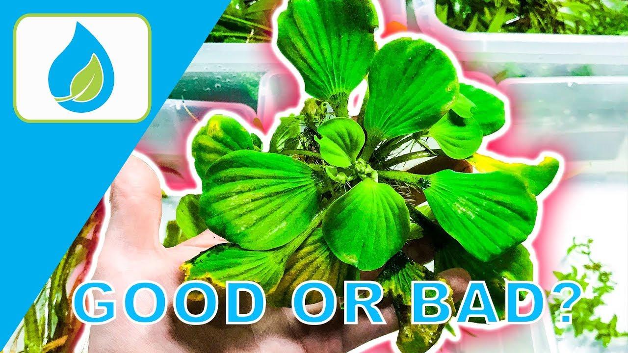 floating aquarium plant tips 010 youtube