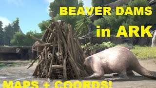 ARK // Beaver Dams in Ark: Infinite CEMENTING PASTE! Where are BEAVER DAMS in ARK's The Island?