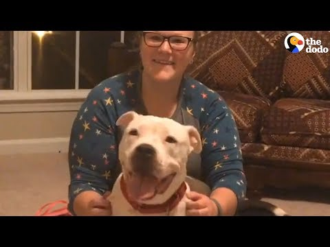 Pit Bull With Cancer Gets Spoiled For The First Time In Her Life | The Dodo
