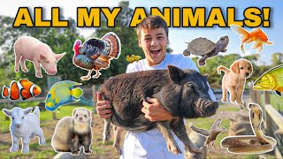 EVERY ANIMAL on My PROPERTY in ONE Video!! (update)