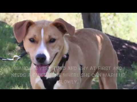 Virginia Dog Rescue - ADOPTIONS - Rescue Me!