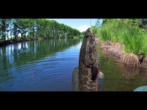 Классная рыбалка на змееголова. (Амурская область)