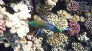 1306.00038 Crunchy Corals Thumbnail