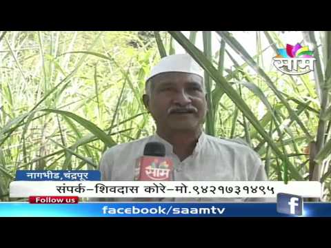 Shivdas Kore's organic vegetable farming success story