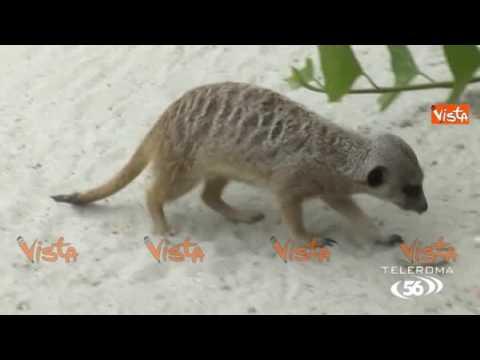 Non chiamatelo Zoo: l'estate al bioparco di Roma