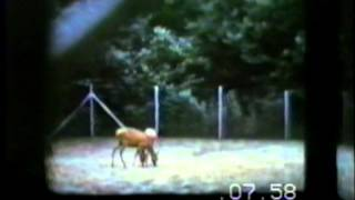 1958 Kansas City Zoo.wmv