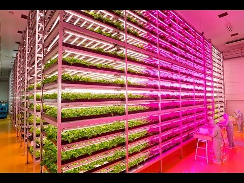 Japanese Farmer Builds Epic Indoor Vegetable Factory