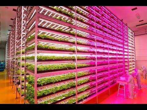 japanese-farmer-builds-epic-indoor-vegetable-factory