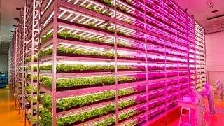 Japanese Farmer Builds Epic Indoor Vegetable Factory