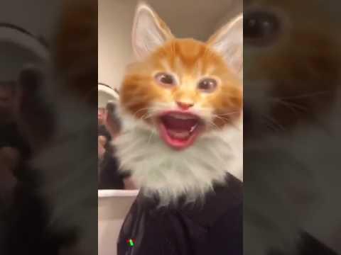 snapcat youtube