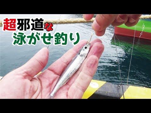 �港入��超邪��泳��を��ら丸��魚�釣れ�