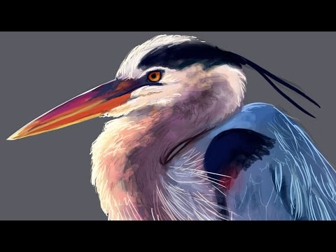 Painting a Heron  //  Color Study  //  2015 April