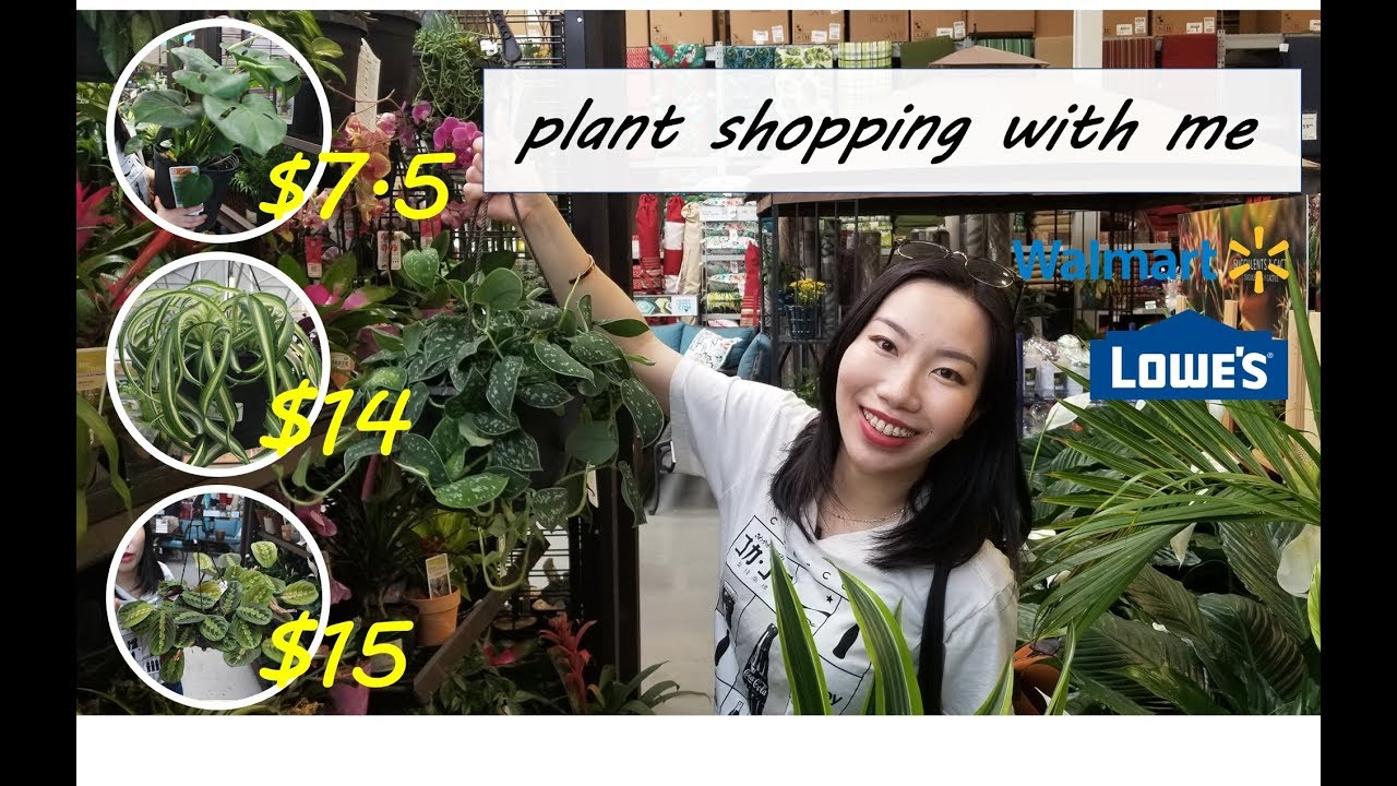 Super Cheap Huge Bird Of Paradise From Costco Plant Unboxing Youtube