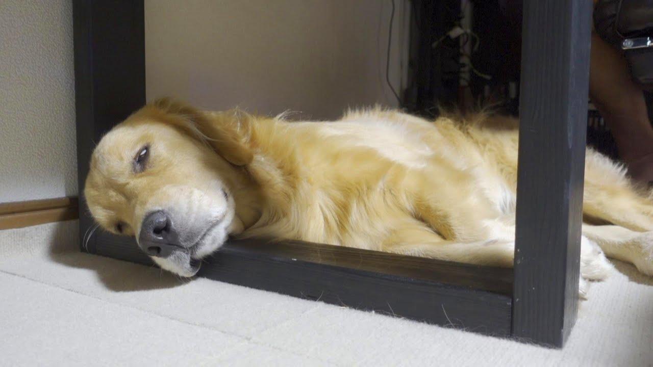 お昼寝中でも大好きなばぁばの訪問には飛び起きる愛犬