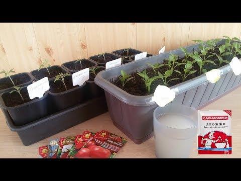 Подкормка рассады томатов после пикировки дрожжами.