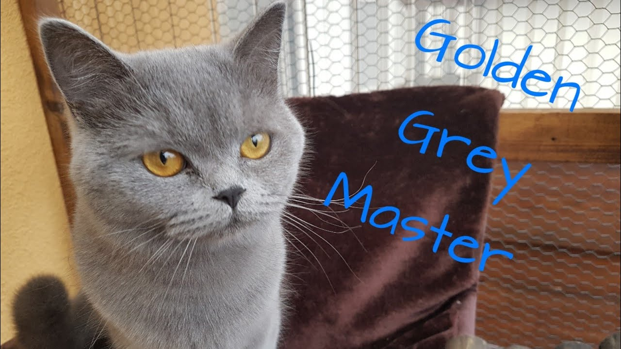 Katzenklo Reinigen Neues Streu Golden Grey Master Youtube