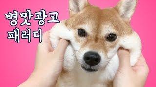일본 병맛 광고 시바견 모찌모찌 하이츄 광고 패러디ㅎㅎ