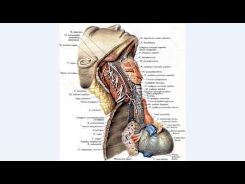 Нервная система - bio-