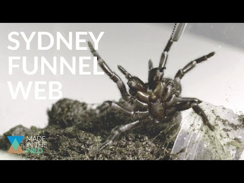 THE MOST DANGEROUS SPIDER ON THE PLANET Ft Sydney Funnel Web Spider