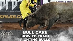 The Difference Between Bucking Bulls And Fighting Bulls