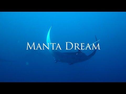 Manta Dream