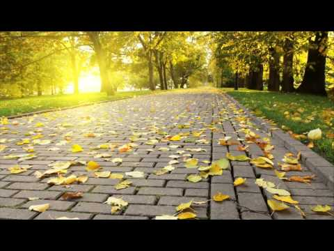 Quiet Piano Study Music- Soft Piano Music to Sleep and Study- Quiet Piano Music for Studying