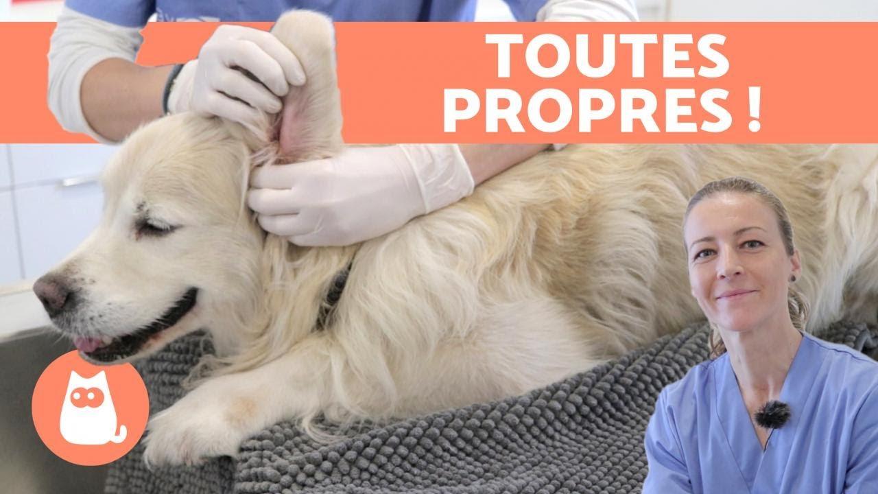 Pieno produktai šunims - Veisimas April Kroketas chien virbac svorio netekimas