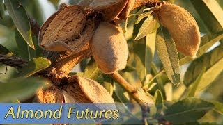 Growing California video series: Almond Futures