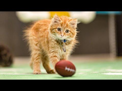Rob Gron-Cat-Ski Celebrates an Interception _ Kitten Bowl III