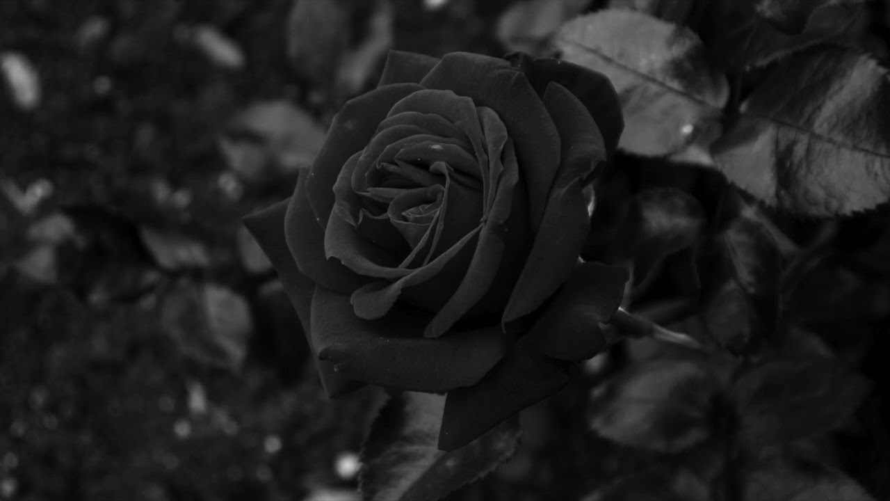 Black Rose (Original Mix)
