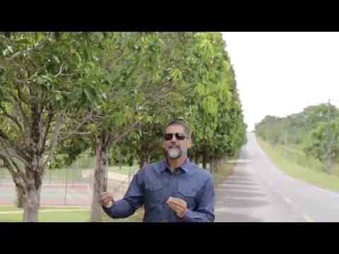 Perseverança a chave do sucesso - Wilbert Batista