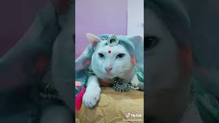 Cat Video Tik Tok I Love You