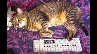 OP 1 Synth Sounds And Initial Track Idea With Cats