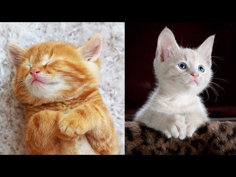 Cute Cats And Kittens Doing Funny Things # 19 | Try Not To Laugh
