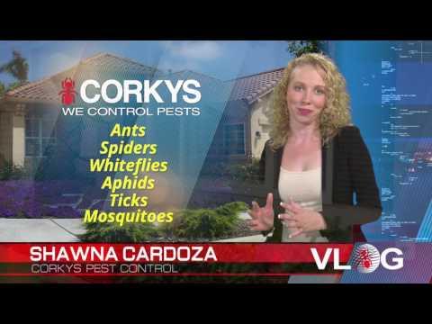 Corkys Ultimate Pest Control Service