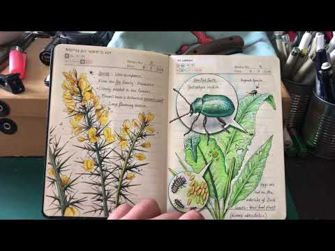 My Nature Journal so far ...