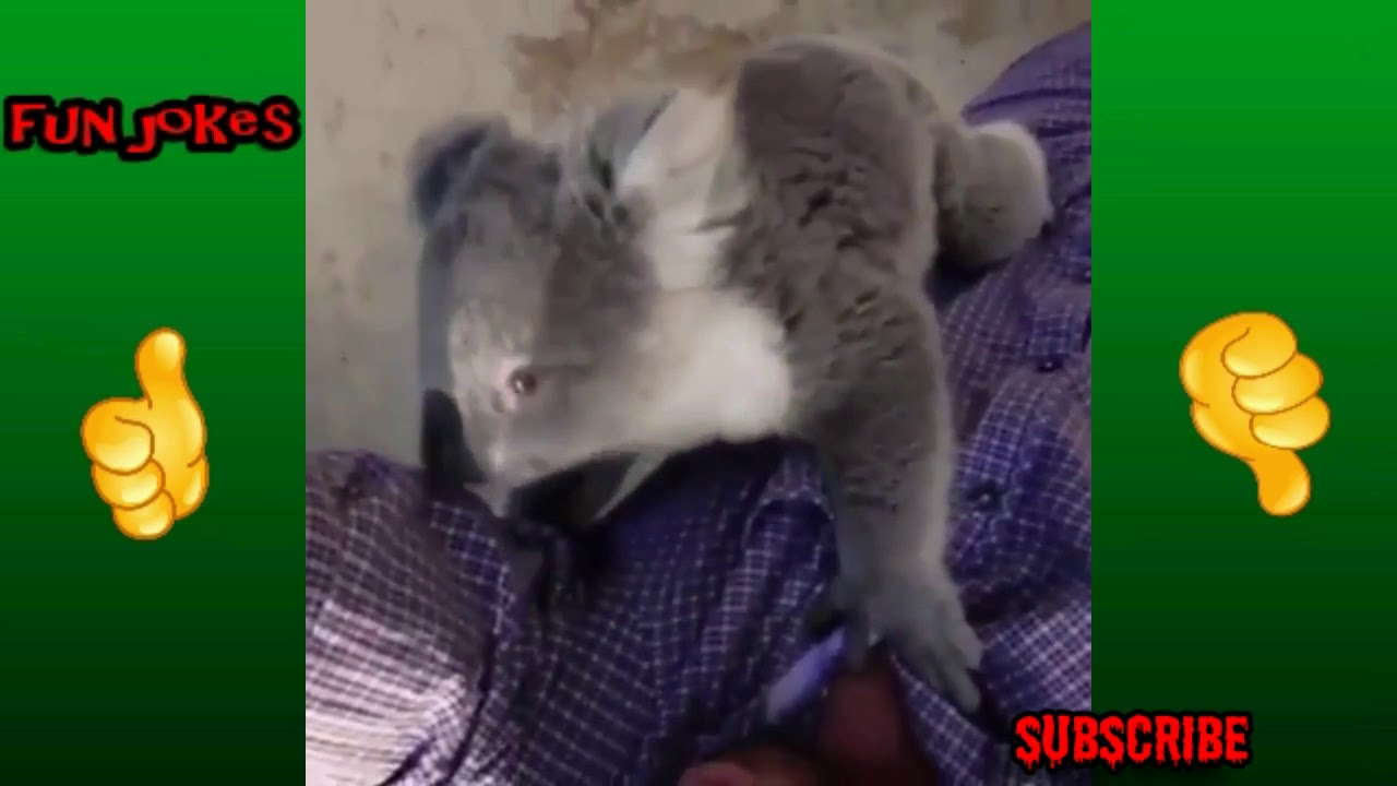 Funny Videos 2018 Compilation Funny KIDS Funny Cats Dogs ... Funny Cat Videos Youtube 2018