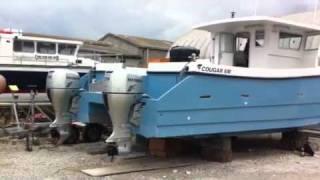 Cougar Catamaran 8m