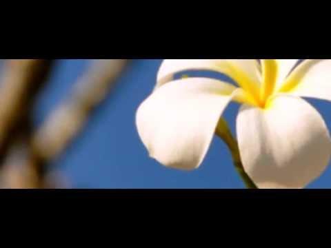 LOSE KOULA KOE EKU NGOUE (Tongan song)